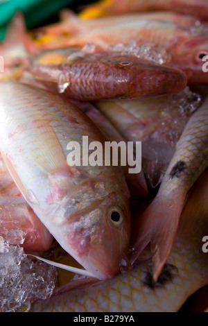 Fresh red snapper in a market near Puerto Galera in Sabang, Oriental Mindoro. Philippines. - Stock Photo