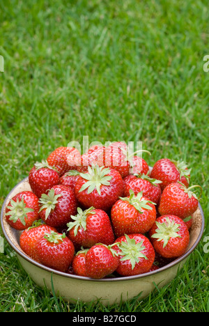 A bowl of freshly picked strawberries on green grass outside - Stock Photo