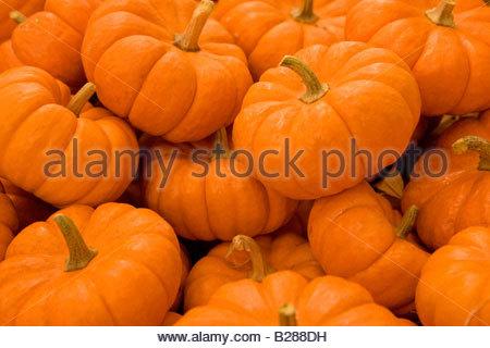 Close up of pumpkins - Stock Photo