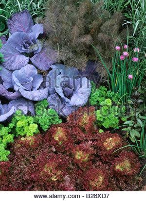 Chelsea flower show 1994 design peter tinsley alpine rock for Xd garden design