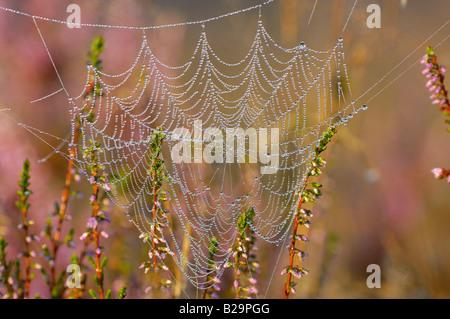 Spider's web - Stock Photo
