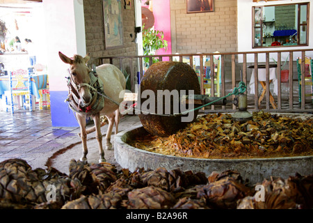 Mezcal Factory Nr Oaxaca, Mexico. Donkey Operating a Millstone to Crush the Cooked Agave Hearts. - Stock Photo