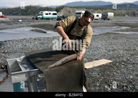 Fisher filleting a big salmon on the banks of the Copper River, Alaska. - Stock Photo