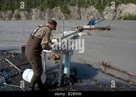 Fisherman filleting a salmon he just caught in the Copper River near Chitina, Alaska - Stock Photo