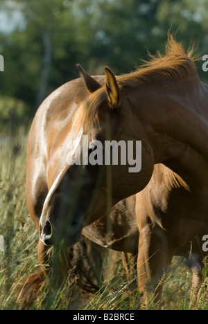 Brown horse in backlight - Stock Photo