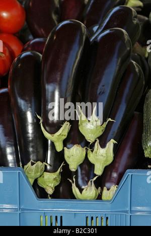 Aubergines or Eggplant (Solanum melogena) - Stock Photo