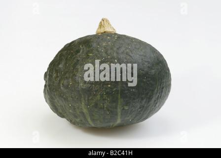 Green Cucurbita (Cucurbita spec.), fruit - Stock Photo