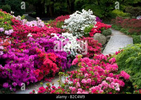 Rhododendrons, Azaleas (Rhododendron spec.) Japanese Garden in the Botanic Garden in Hamburg, Germany, Europe - Stock Photo