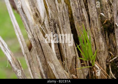 New habitat being settled, Lueerwald Forest, Sauerland, North Rhine-Westphalia, Germany, Europe - Stock Photo