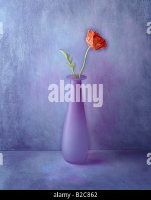 1 of a series of portrait format colour color pictures  this one is of a red flower on a hand painted lilac background - Stock Photo