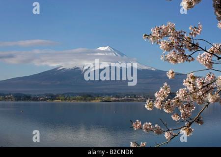 Mt Fuji and cherry blossom at lake Kawagutiko Yamanashi Japan - Stock Photo