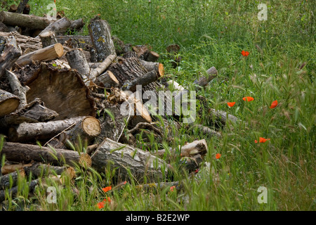 Log pile with poppies growing in the grass, left on forest floor provides shelter for small animals and enriches - Stock Photo