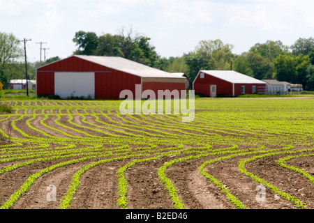 Rows of seedling corn plants on a farm in Montcalm County Michigan - Stock Photo