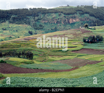 Terraced cultivation on a ledge of the western scarp of the Abysinnian Rift Valley at Ankober. - Stock Photo