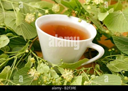 Common lime or linden tree infusion Tilia platiphyllos or cordata - Stock Photo