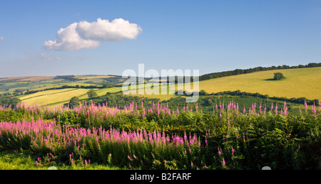 Summer wildflowers near Luxborough in Exmoor National Park Somerset England - Stock Photo