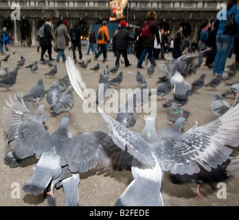 Pigeons in St Mark s Square Venice Italy - Stock Photo