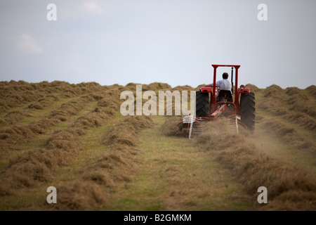 farmer sitting on a massey ferguson 185 old tractor pulling a haymaker attachment in a field making hay county down - Stock Photo