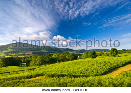 Caer Caradoc from the slopes of Long Mynd, near Church Stretton, Shropshire, England, UK. - Stock Photo