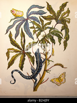 zoology, insect, butterfly, caterpillar, cocoon, plant, lizard, copper engraving, watercoloured, from 'Metamorphosis - Stock Photo