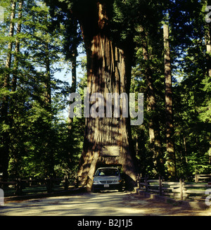 America, California, Car, Chandelier, Chandelier tree, Contrast ...