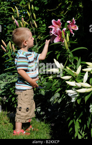 A beautiful little boy admiring lilly blooms in his mother's garden - Stock Photo
