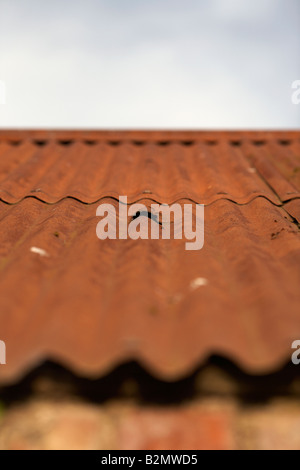 hole in a rusty tin roof of an outbuilding county down northern ireland - Stock Photo