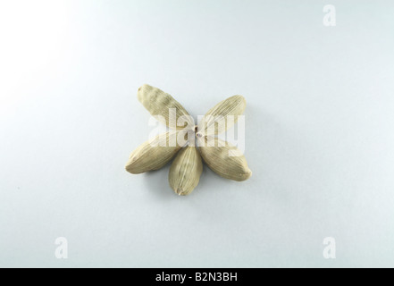Beautifully arranged set of five cardamoms in white background - Stock Photo