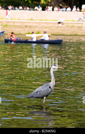 Heron on a look out River Thames Richmond TW10 Surrey United Kingdom - Stock Photo