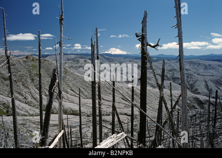 Mount Saint Helens devestated area with Mount Adams in background Washington State USA - Stock Photo