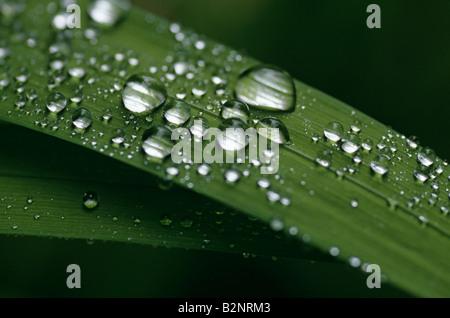 Dew drops on green blades of grass sunrise close up coastline Ophir Oregon State USA - Stock Photo
