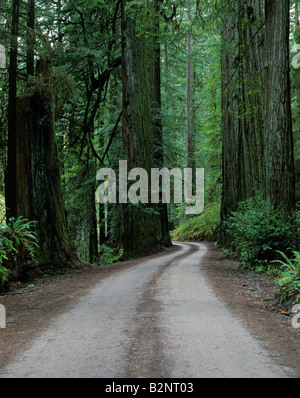 Jedediah Smith Redwoods State Park dirt road going through redwood forest California USA - Stock Photo