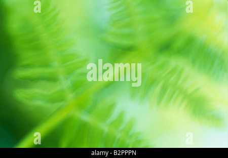 Impressionistic close up of fresh spring green frond of the fern Bracken or Brake or Pteridium aquilinum with backlit - Stock Photo