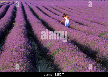 Woman in white dress walking through fields of lavender in Provence - Stock Photo