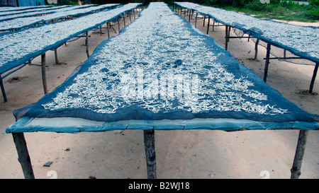 Rack of anchovies drying in sun outdoors Phu Quoc Island Vietnam - Stock Photo