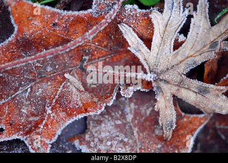 Macro of autumn leaves on the ground covered with morning frost - Stock Photo