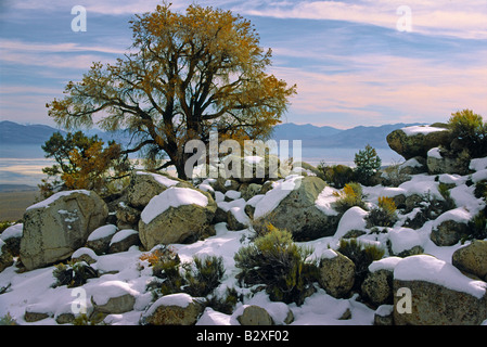 Wintery scene with lonely tree in the Sierra Nevada foothills near the Alabama HIlls in California - Stock Photo