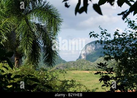 View over green valley towards steep limestone mogote hills in Viñales Cuba - Stock Photo