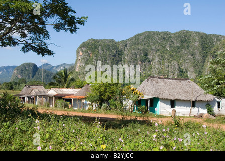 Traditional thatched wooden houses with steep limestone mogotes in the distance in the Viñales valley Cuba - Stock Photo