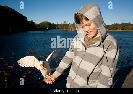 Ten Year old boy feeding a Corella Centennial Parkland Sydney New South Wales Australia - Stock Photo