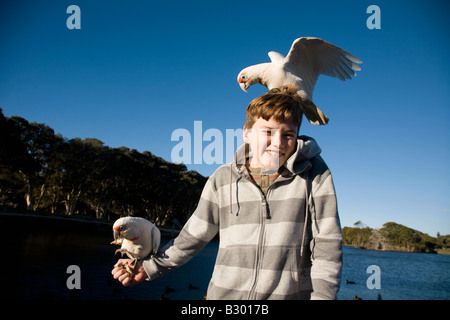 Ten Year old boy feeding Corellas Centennial Parkland Sydney New South Wales Australia - Stock Photo