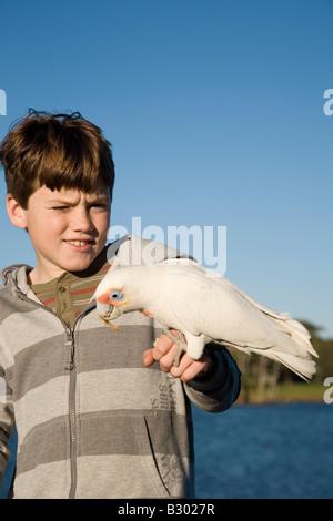 Ten Year old boy feeding a Corella Centennial Parkland Sydney New South Wales Australia - Stock Photo