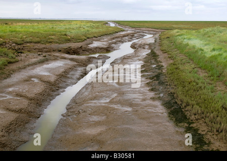 fens landscape, the wash, lincolnshire, england - Stock Photo
