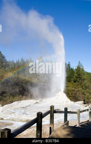 Atmospheric attraction of the 'Lady Knox Geyser' - Stock Photo