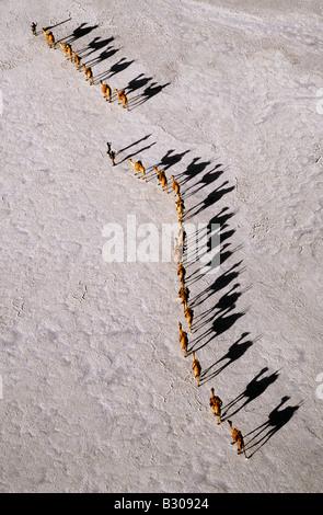 Djibouti, Lake Assal. An Afar camel caravan crossing the salt flats of Lake Assal, as shadows lengthen in the late - Stock Photo