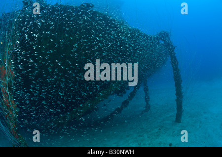 Anchor Chain of bottom up laying USS Arkansas Battleship Marshall Islands Bikini Atoll Micronesia Pacific Ocean - Stock Photo