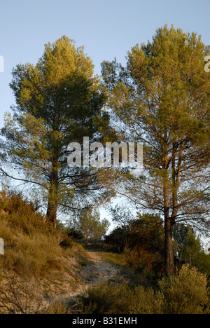 path down to Els Tolls, near Vall de Ebo village, Marina Alta, Alicante Prov. Comunidad Valenciana, Spain - Stock Photo