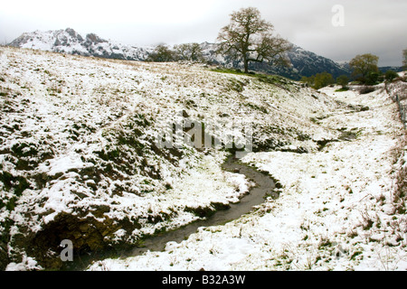 A tiny creek snakes its way through the freshly dusted hills off Lone Tree Road in the Diablo Range in San Benito - Stock Photo