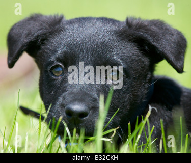 Puppy dog hiding in the grass - Stock Photo