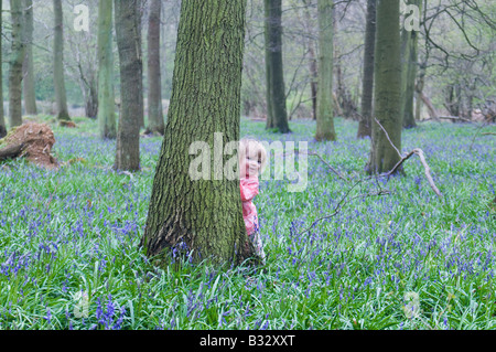Toddler young girl peering around tree in Bluebell wood Bucks UK April - Stock Photo